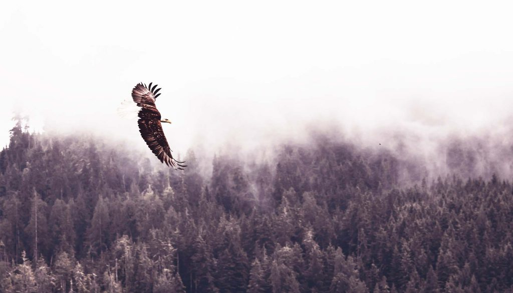 Blog ekspertów IT, Zabbix z lotu ptaka